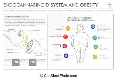 Endocannabinoid System and Obesity horizontal business infographic Complete