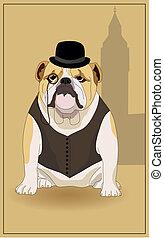 English bulldog and symbol of England. Vector illustration.