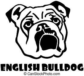 English Bulldog head