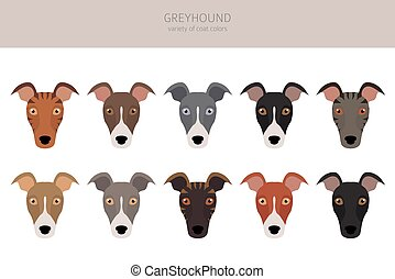 English greyhound dogs different coat colors. Greyhounds characters set