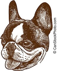 engraving illustration of french bulldog head