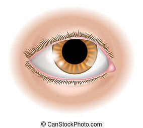 An illustration of a human eye body part, could represent sight in the five senses