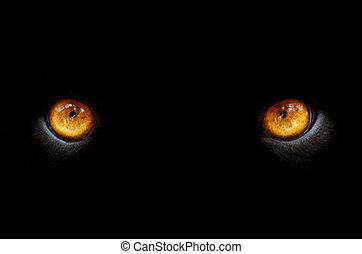 eyes of a pather