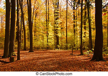 Colorful sunlit fall forest with fallen leaves covering the ground
