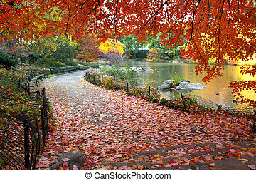 Autumn leaves in Central Park New York