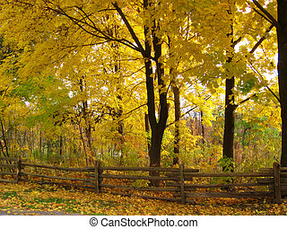 Yellow leaves on a forest of trees with a trailing wooden fence by Webster Falls, Dundas, Ontario, Canada