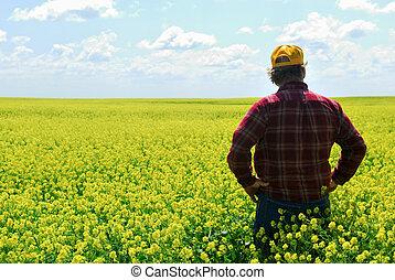 A farmer inspects canola crop. Older generations still call canola rape or rapeseed.