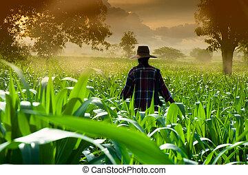 Farmer woman walking in corn fields at early morning