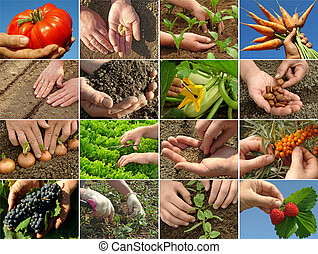 hands of farmer in action
