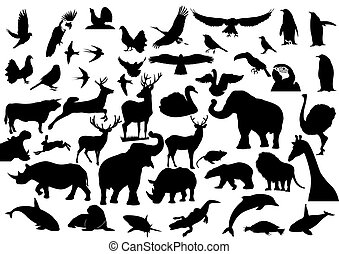 Contour images of fauna on the planet Earth