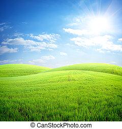 Field of fresh grass