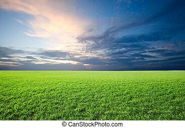 Field of green fresh grass under blue sky