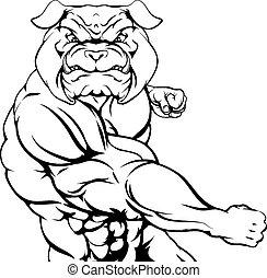 Fighting bulldog
