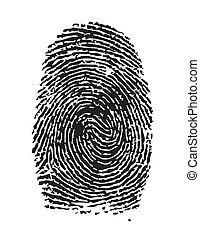Highly detailed illustration of a fingerprint