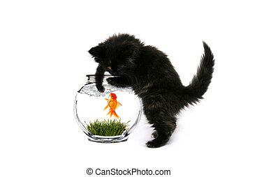 Black Baby Kitten Curiously Playing With a Goldfish in the Water