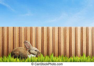 Fluffy bunny on green grass field
