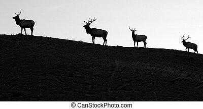Four silohetted elk head across a ridgeline in single file