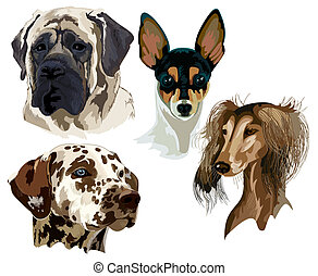 Four different breeds of dog muzzle