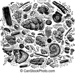 Fragment of chalk seen under a microscope, vintage engraved illustration. Earth before man – 1886.