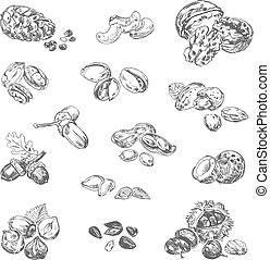 Freehand drawing nuts. Pistachios, cashews, coconut, filbert, peanuts, almonds, acorn, coconut, seeds, chestnut, pine nuts, acorn. Vector illustration. Isolated on white background