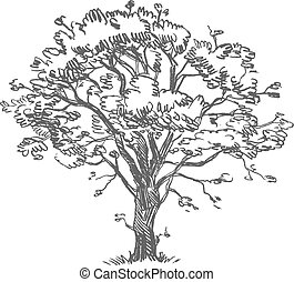 Freehand drawing tree. Vector illustration. Isolated on white background