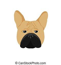 French Bulldog. Cute Cream or Fawn Frenchie.