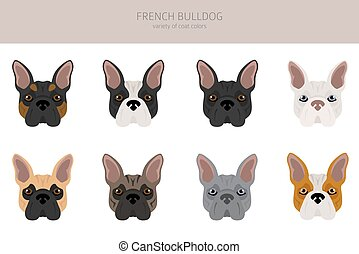 French bulldog. Different varieties of coat color dog set