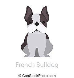 French bulldog dog breed. Cute funny animal