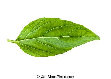 fresh basil leaf isolated on a white background