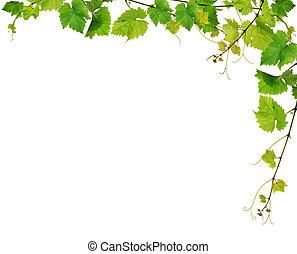 Fresh grapevine border, isolated on white background