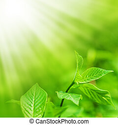 Defocus view for background and copy space. fresh new green leaves glowing in sunlight.
