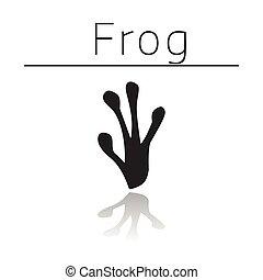 Frog animal track
