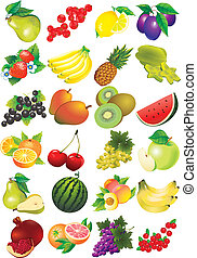 Various juicy fruits on a white background. Healthy food. Vector art-illustration.