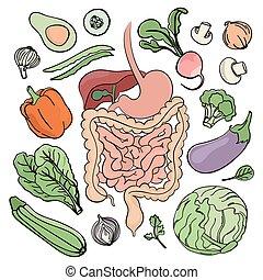 GASTROINTESTINAL TRACT VEGAN Nutrition Vector Illustration