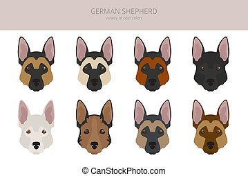 German shepherd dogs different coat colors. Shepherd characters set