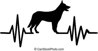 German Shepherd pulse