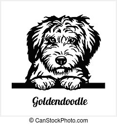 Goldendoodle - Peeking Dogs - breed face head isolated on white