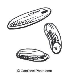 Grains of rice. Vector vintage hand drawn hatching illustration