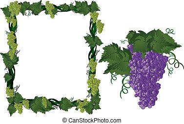 Grapes on vine in frame