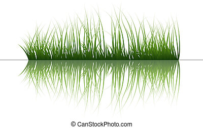 Vector grass silhouettes background with reflection in water. All objects are separated.