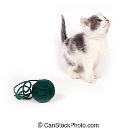 A gray and white kitten with a ball of yarn.