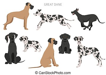 Great dane dogs in different poses. Adult and great dane puppy set