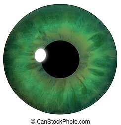 Illustration of the iris of a green eye.