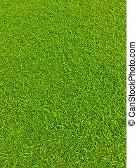Green football field grass