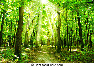 green forest sunlight and shadows