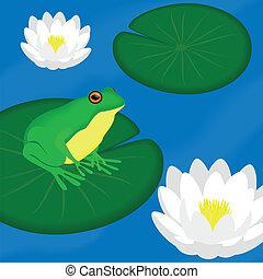 Green frog sits on a leaf in a pond, vector illustration