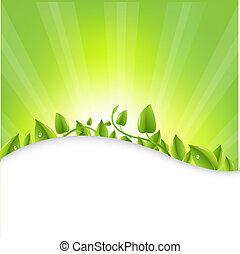 Green Leaves With Sunburst