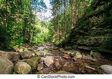 green moss on rocks near a stream