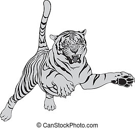 grey tiger isolated on the white background