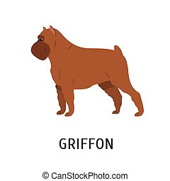Griffon Bruxellois or Brussels Griffon. Cute small toy or lap dog isolated on white background. Adorable purebred domestic animal or pet of decorative breed. Vector illustration in flat cartoon style.
